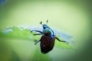 insektenschutz schiebet r professioneller schutz vor insekten. Black Bedroom Furniture Sets. Home Design Ideas
