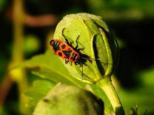 fliegengittertüren mit insektenschutzgewebe
