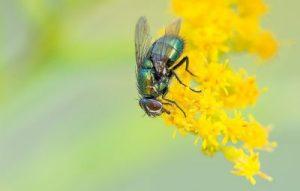 insektenschutz für fenster