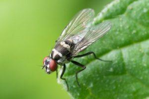 insektenschutz für jedes budget