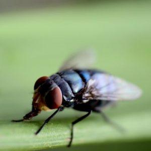 schutz gegen insekten mit einem insektenschutzrollo