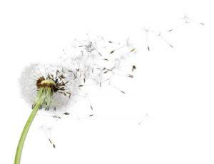 wohlfühlen dank insektenschutztür